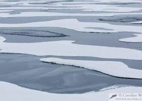 Patterns of sea ice in Lancaster Sound. (c) Caroline Weir.