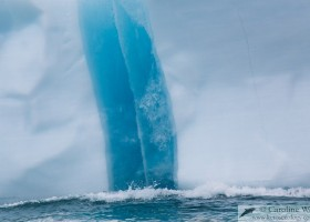 Blue and white. Iceberg at Akpait, Baffin Island. (c) Caroline Weir.