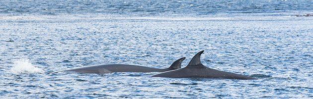 (c) Caroline Weir / Falklands Conservation